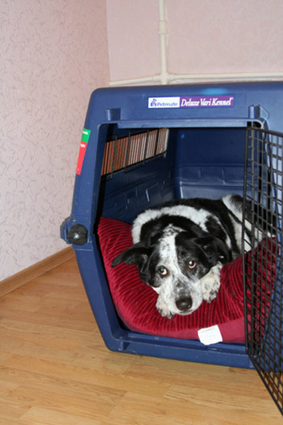 Dogs_ride_in_crates