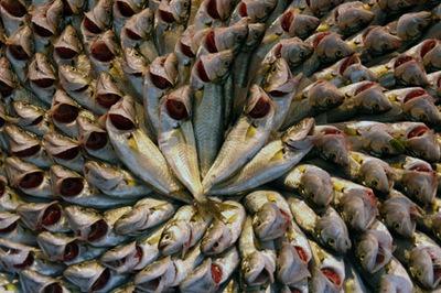 Fish_circle