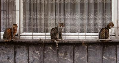Jail_cats